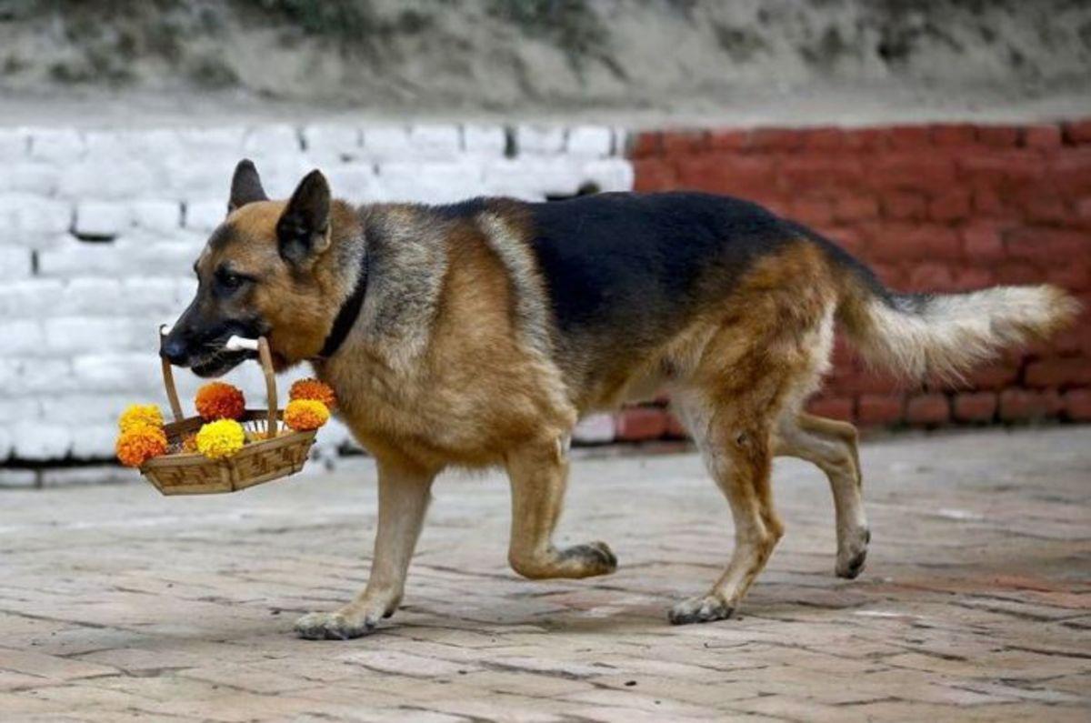 Dog worship in Nepal