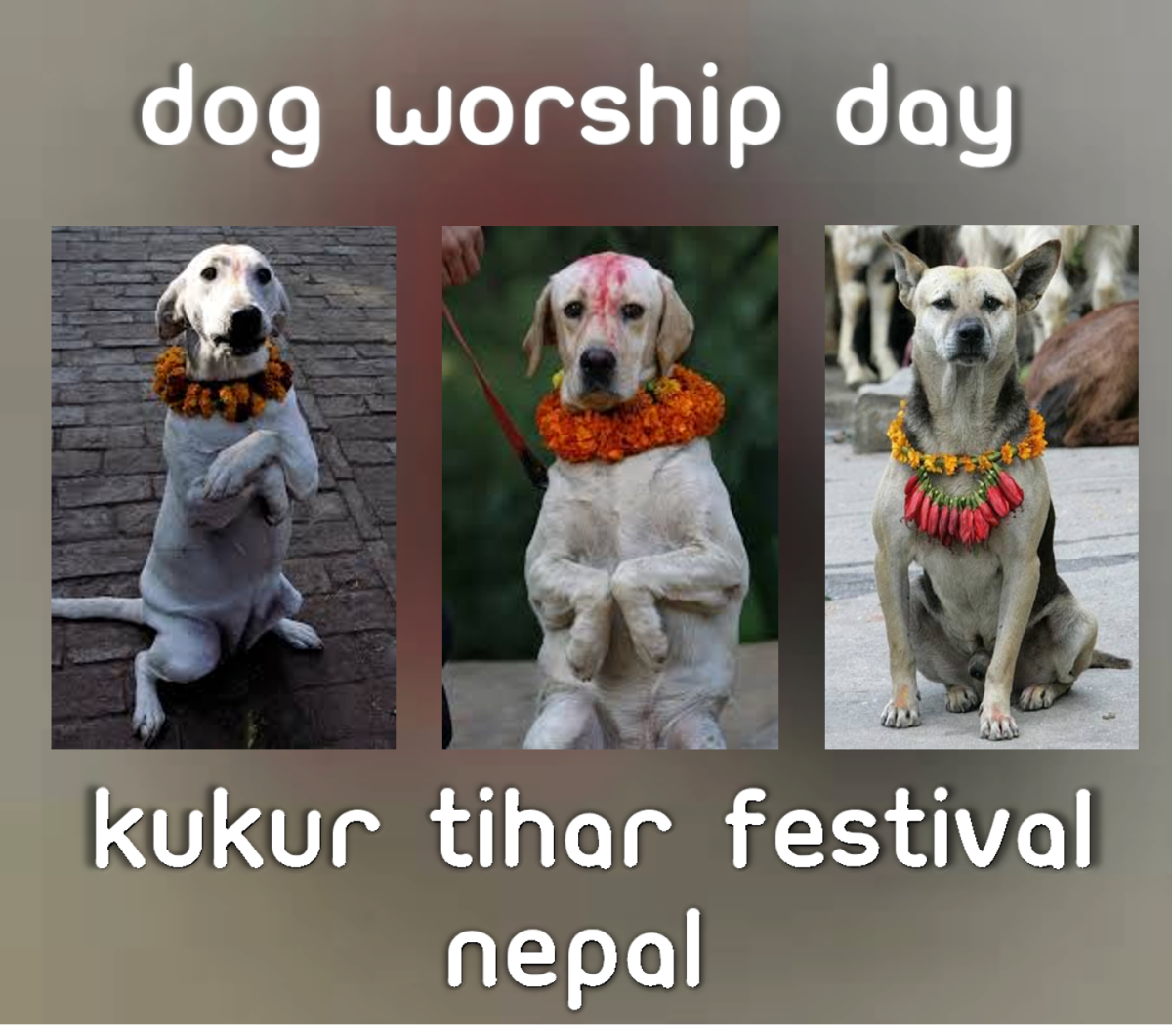 Kukur Tihar Festival and Hindu's Conviction to Dog Worship