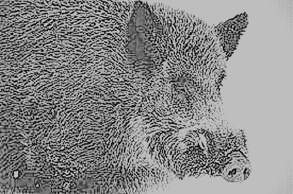 The boar was powerful, muscular and savage.