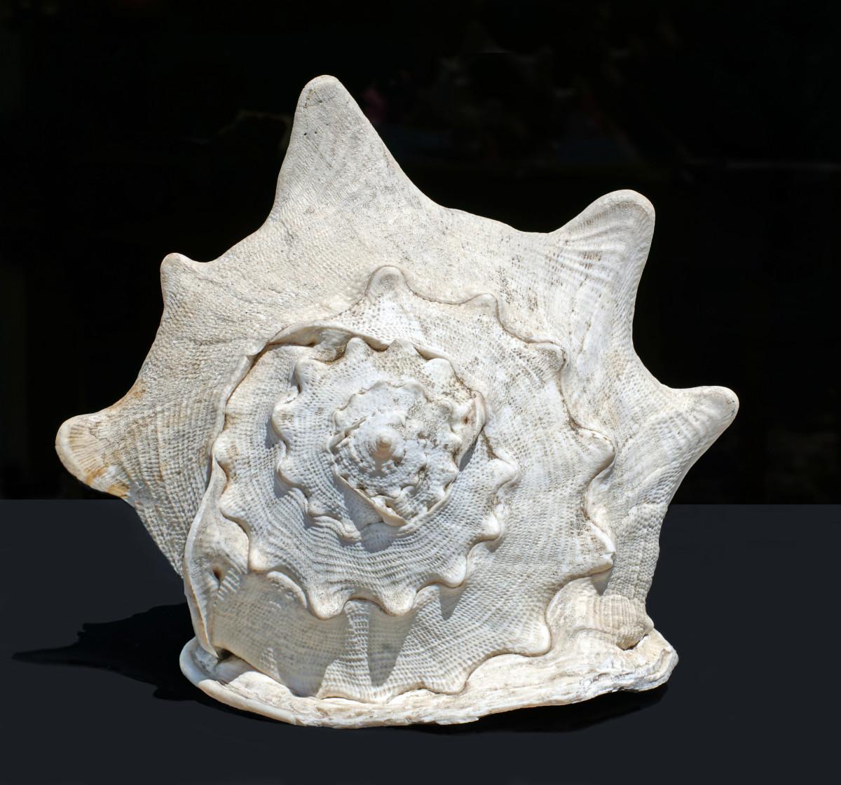 Queen (Emperor) Helmet Shell