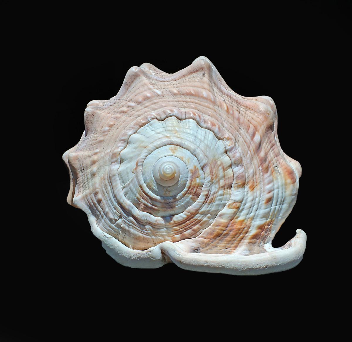Cameo Helmet Shell