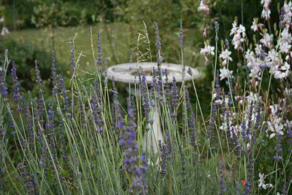 the-joy-of-lavender-and-its-many-uses