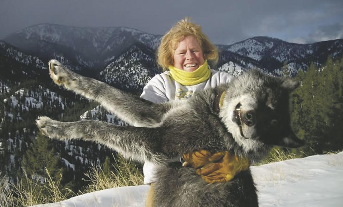 The Largest Wolf