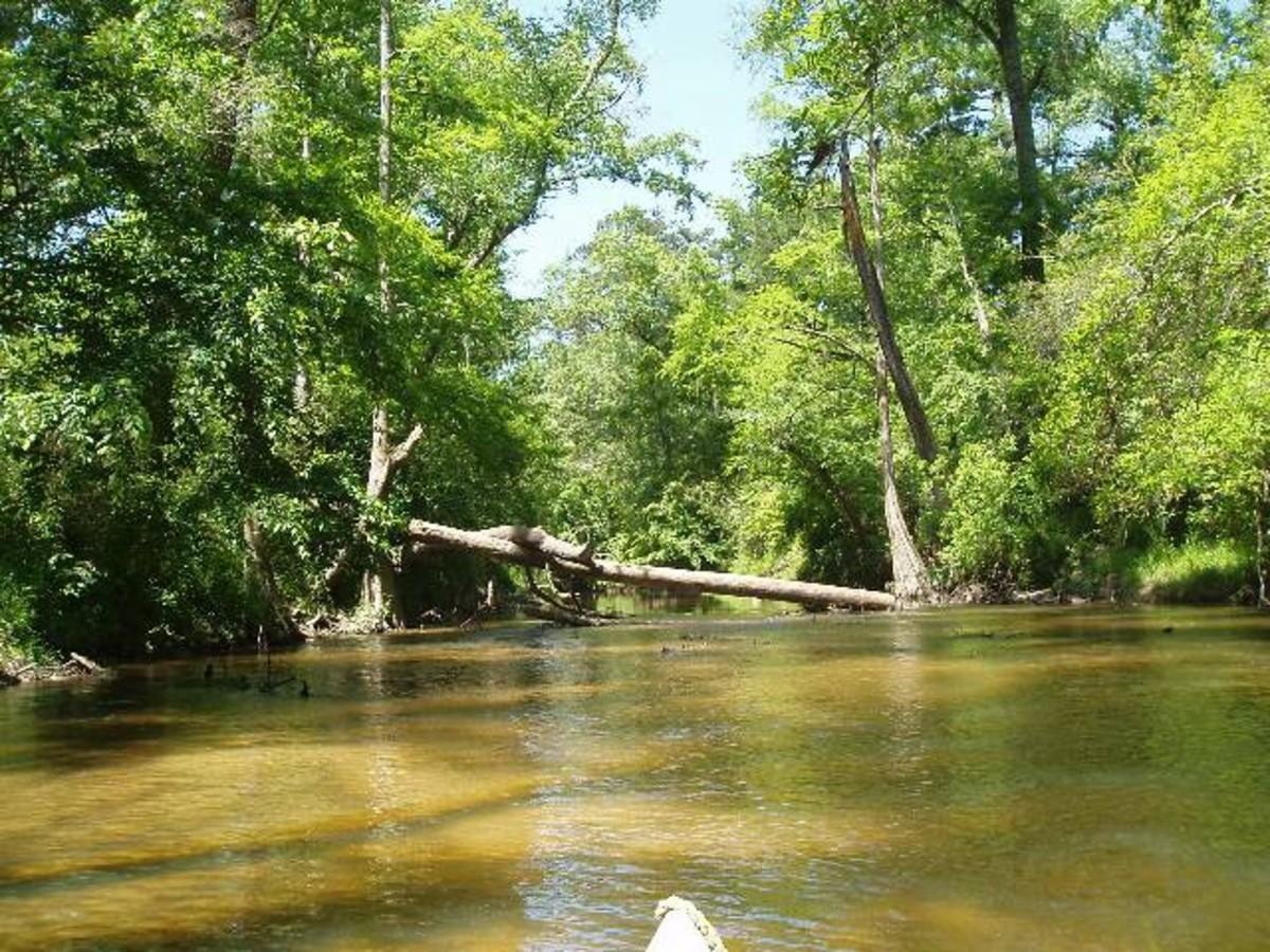 canoeing_tchefuncteriver