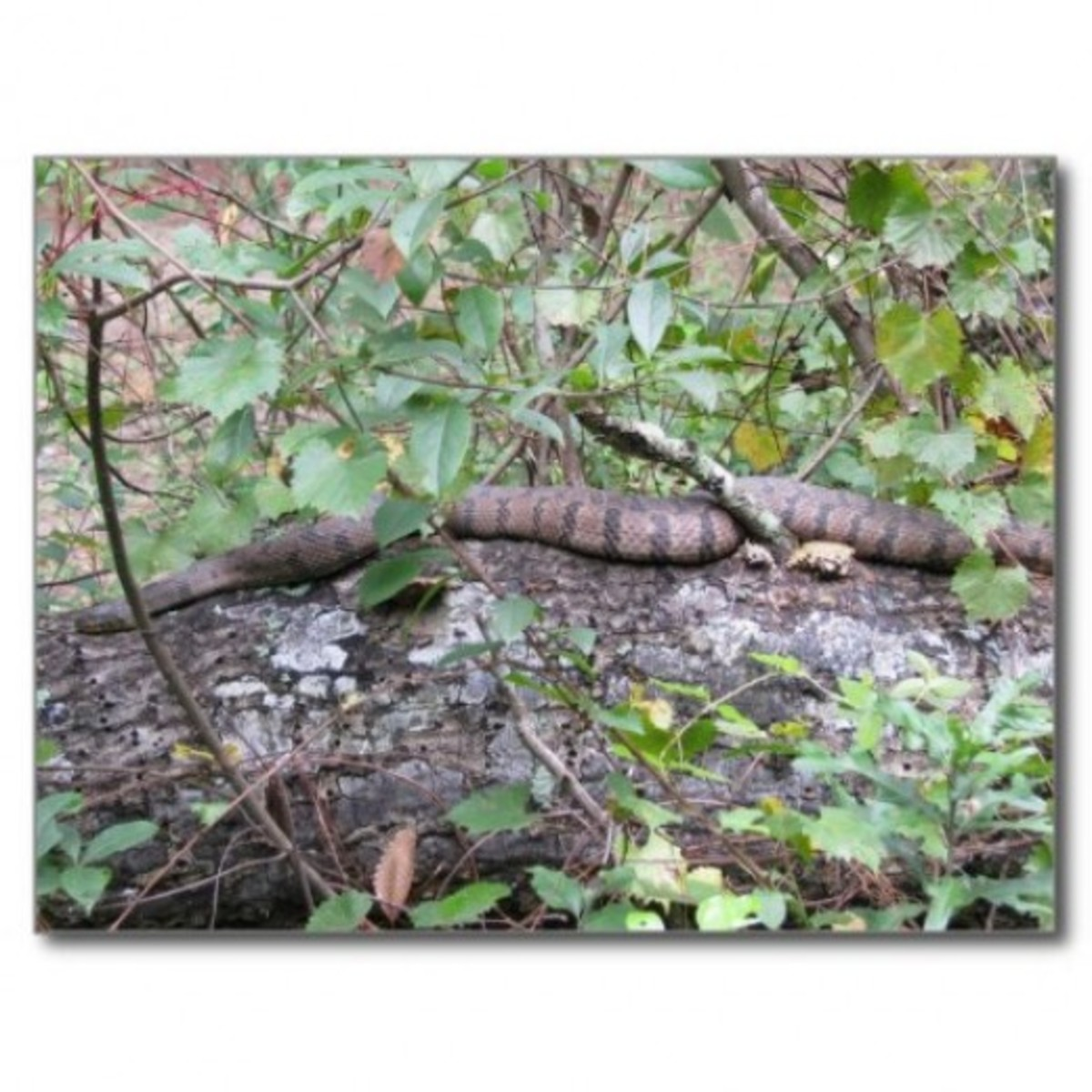 Snake on a log by naturegirl7 was taken after Hurricane Katrina.