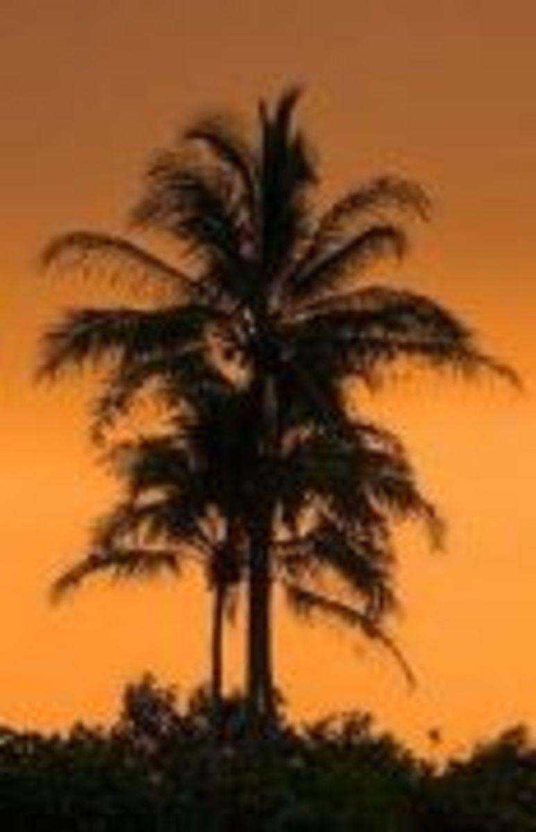 coconut-tree-2