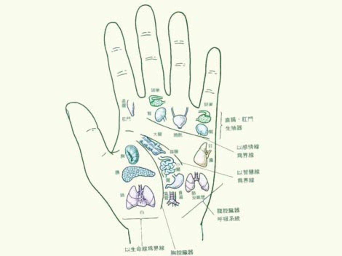 Palmistry        An Insight Of this Art | HubPages