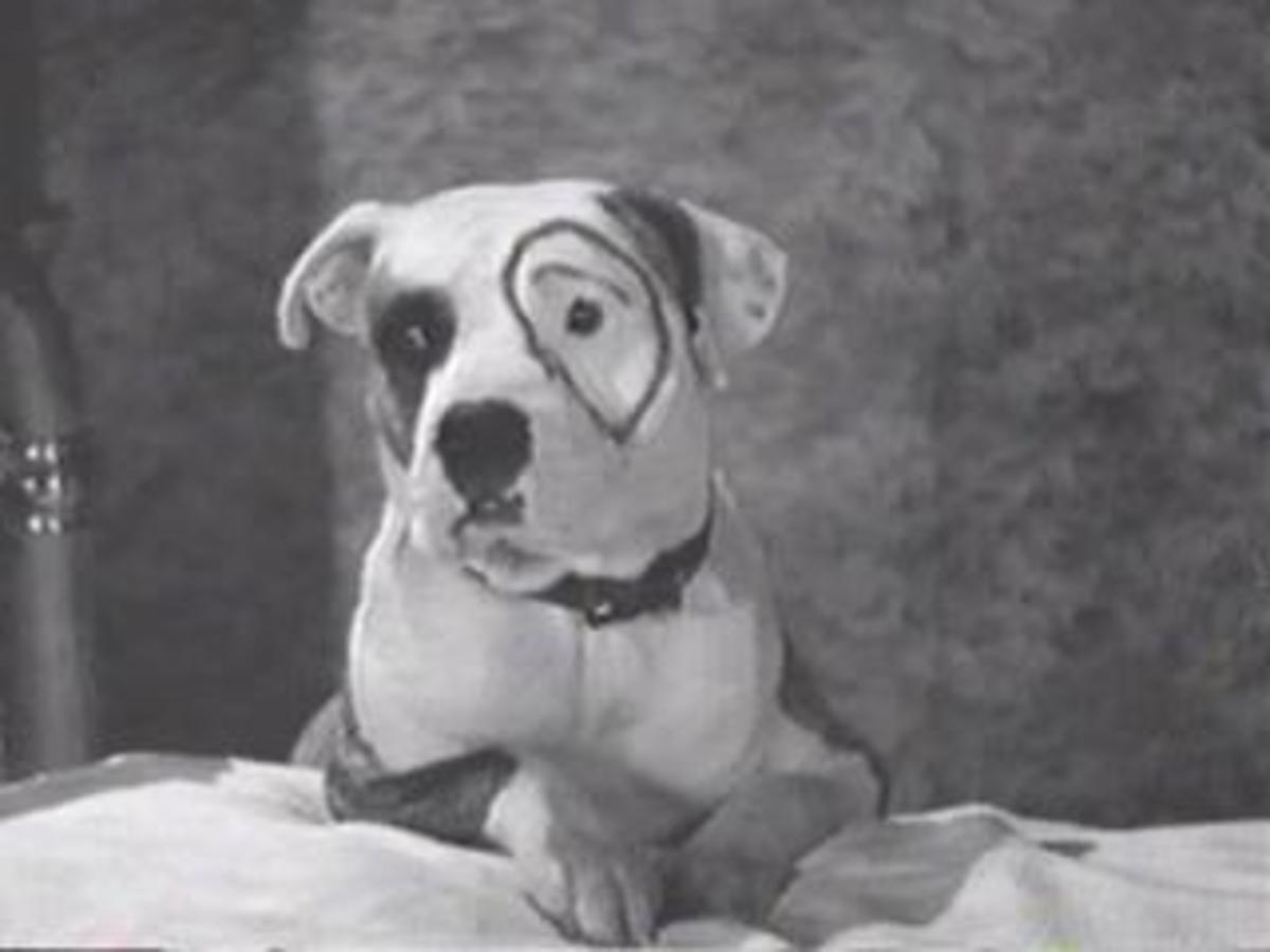 top-10-dog-film-stars-of-all-time