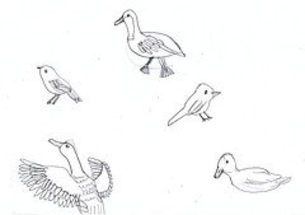 audubon-artist-study