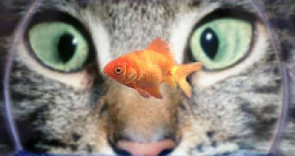 Fish is welcome in a cat's diet