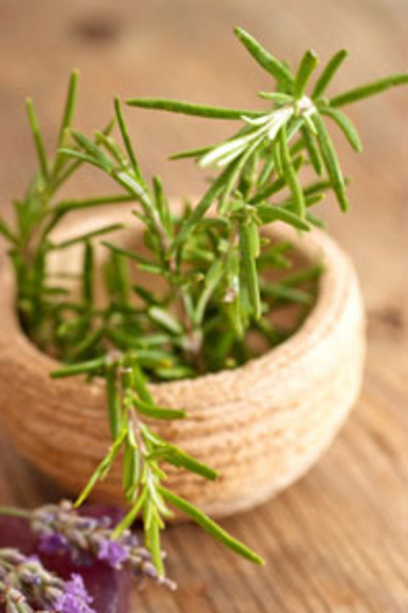 ancient-history-of-essential-oil-as-medicine