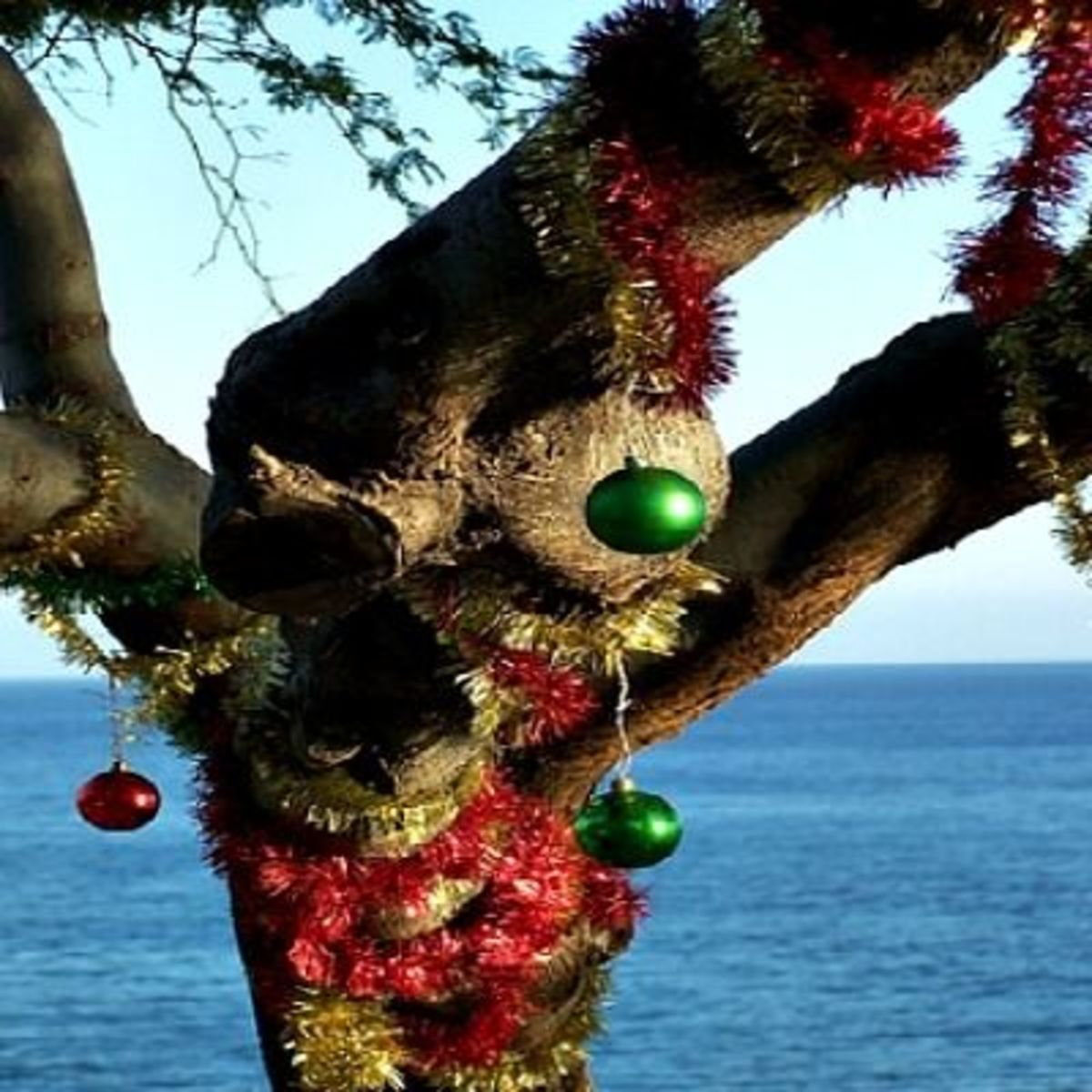 The keawe tree needs some Christmas cheer
