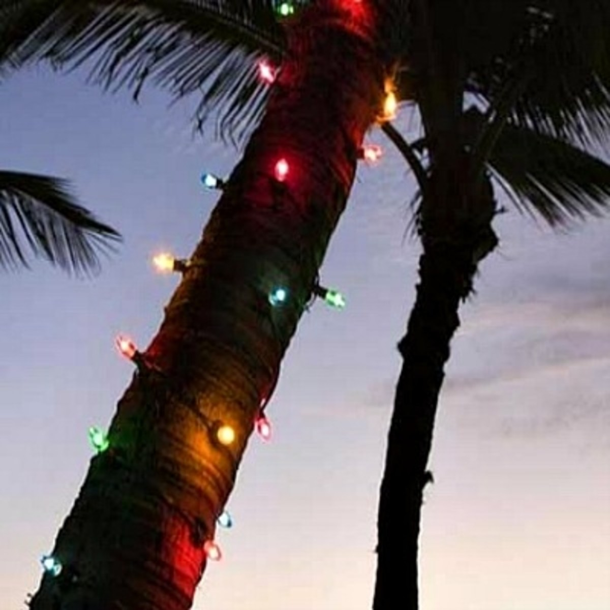 Coconut Tree Wrapped with Christmas Lights