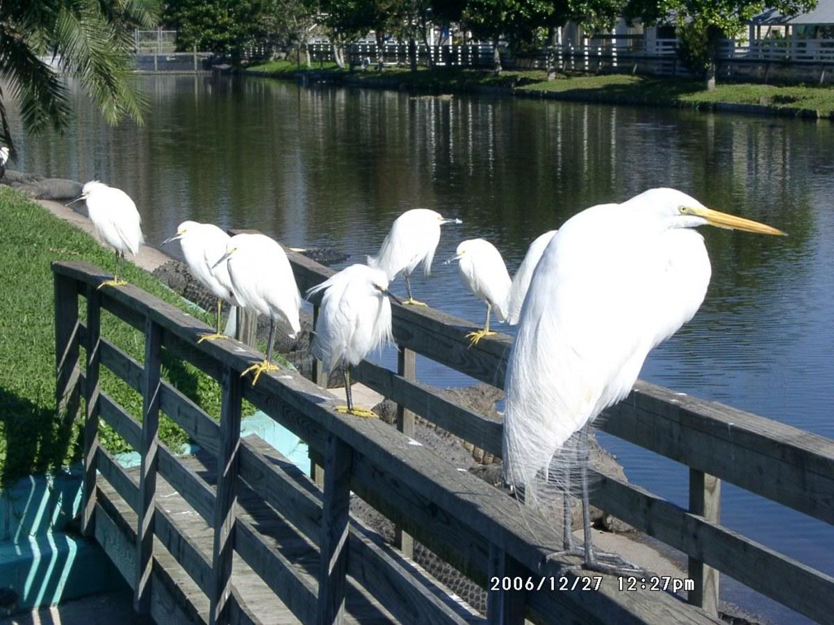 Identify the Water Birds