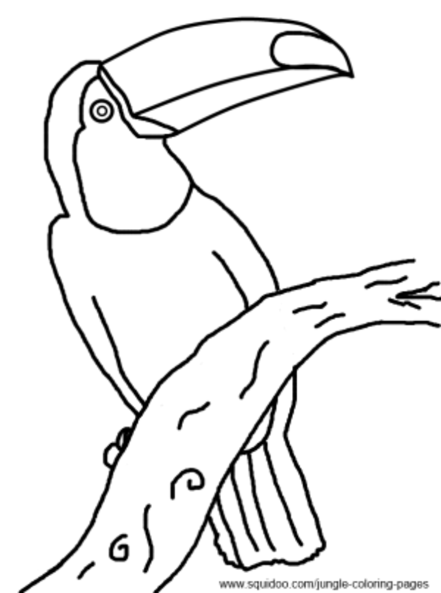 The pictures for Rainforest Toucan Coloring Page