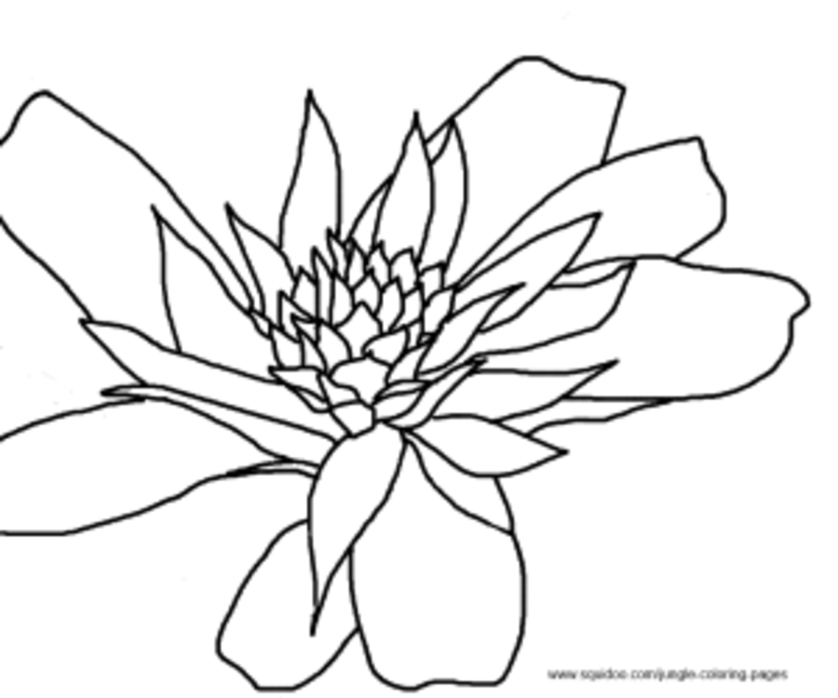 Jungle Flowers Coloring Pages Colouring Page 2