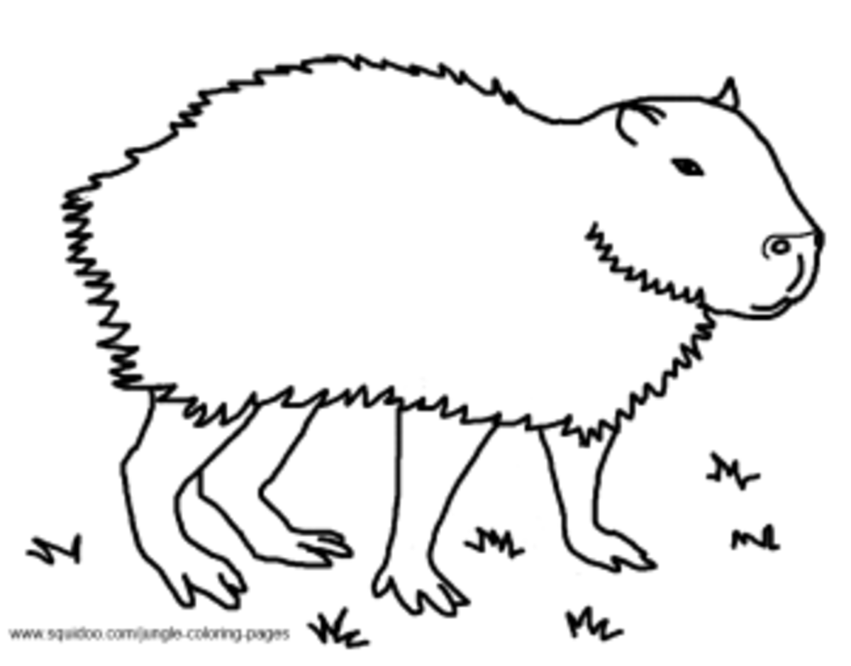 Capybara coloring pages