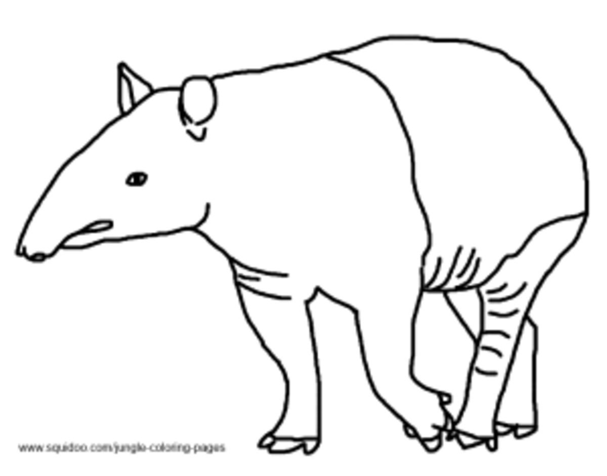 Jungle coloring pages for Tapir coloring page