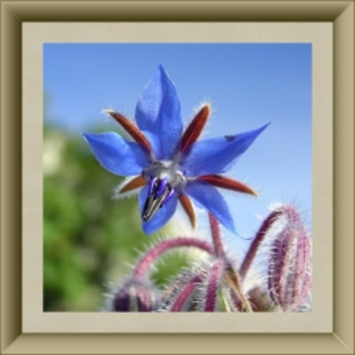 50 Delightful Edible Flowers