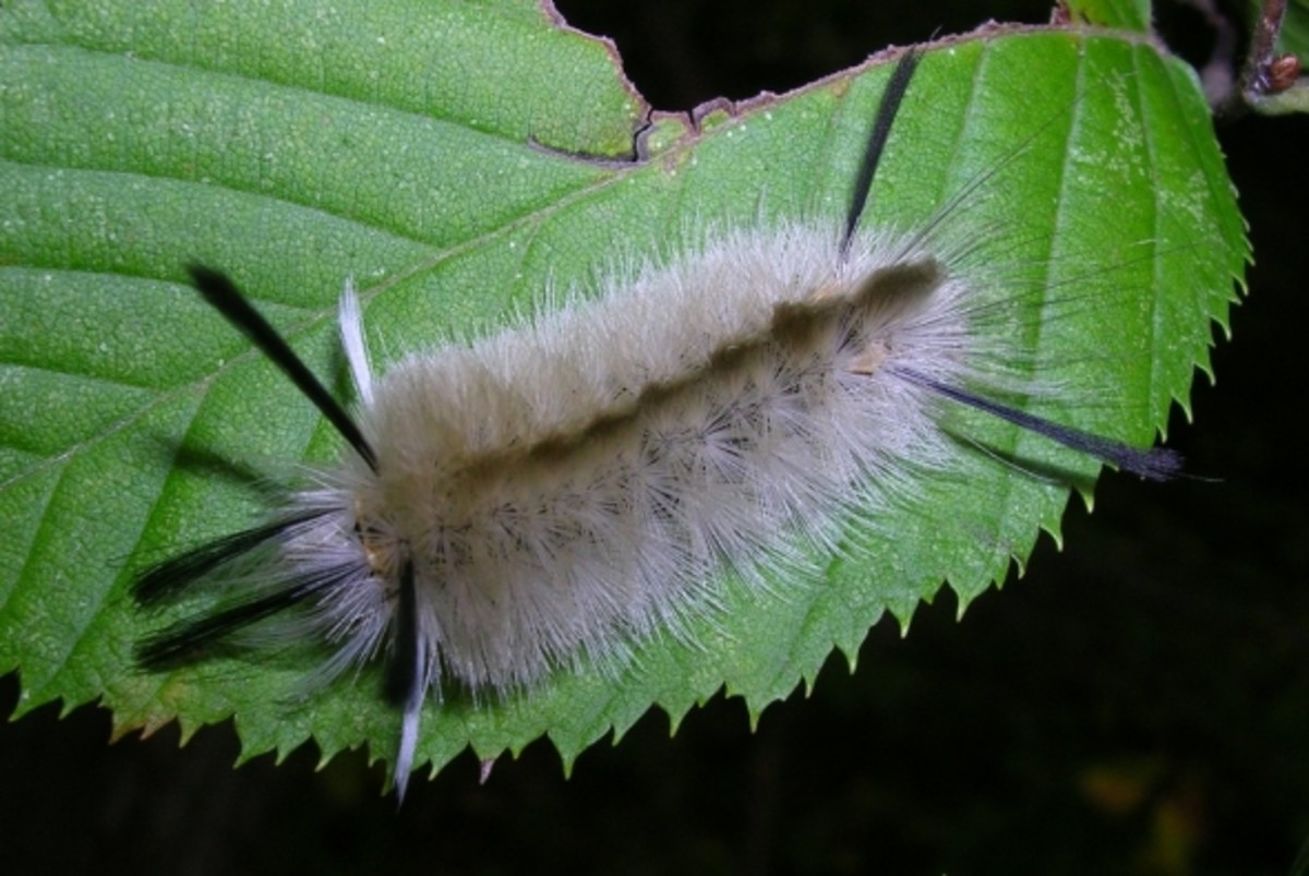 cute-caterpillar-photos