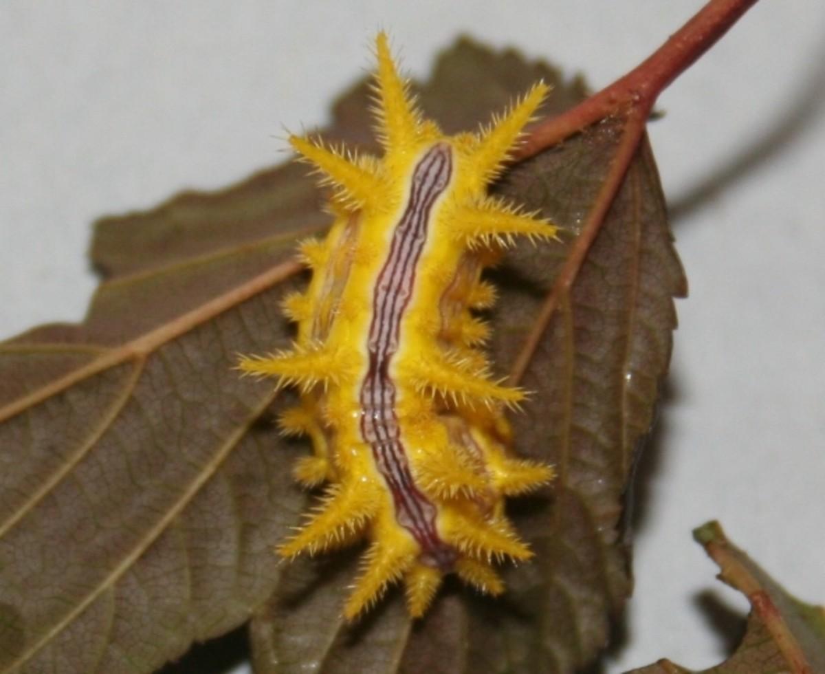 Top 10 Beautiful Caterpillar Photos | HubPages