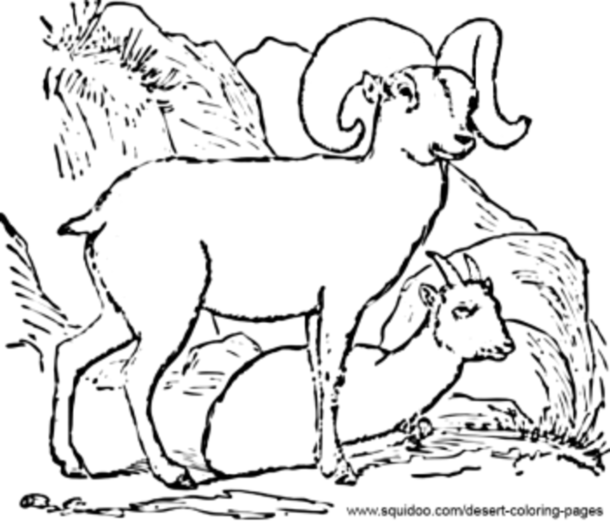 Long horn sheep coloring pages ~ Desert Coloring Pages