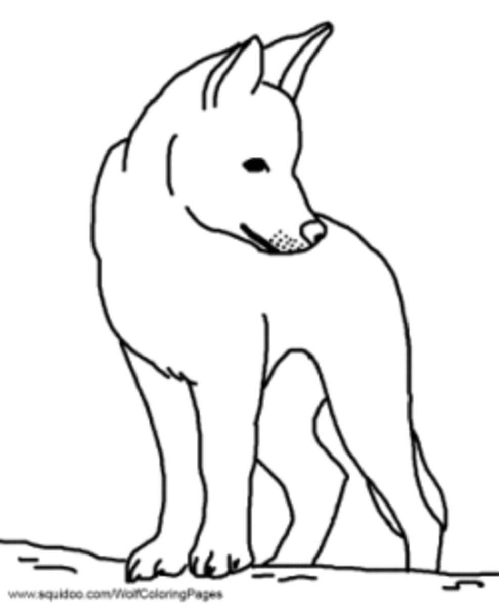 Dingo coloring pages