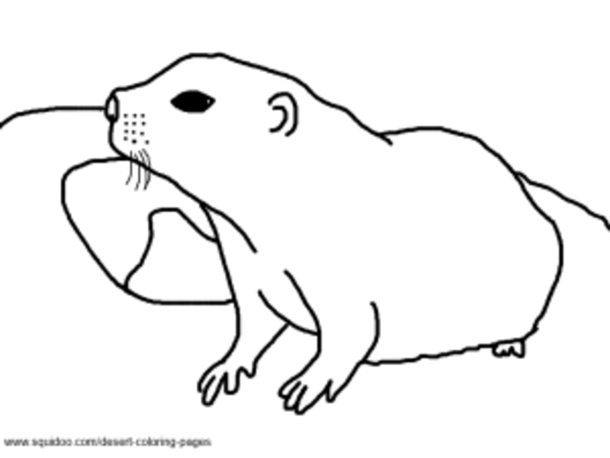 Ground Squirrel Coloring Pages