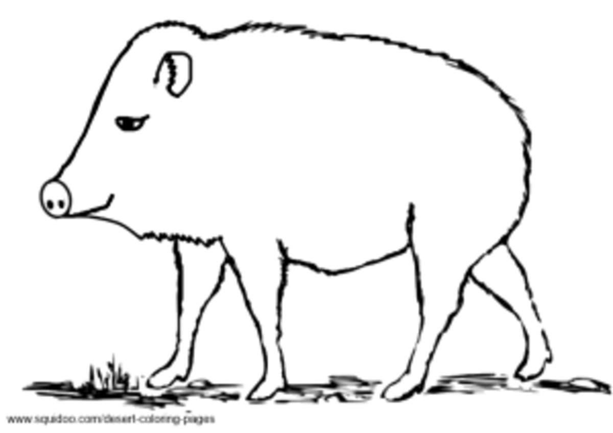 Javelina Coloring Pages