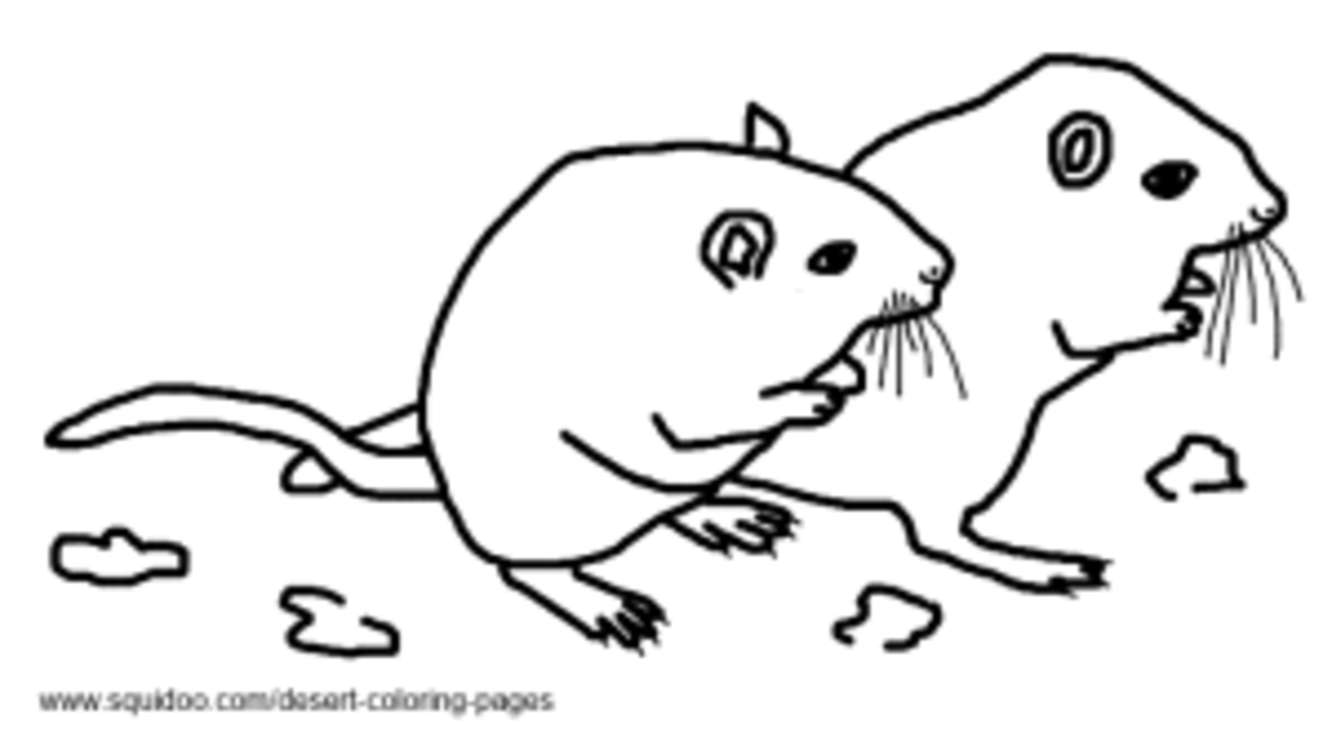 Gerbil Coloring Pages