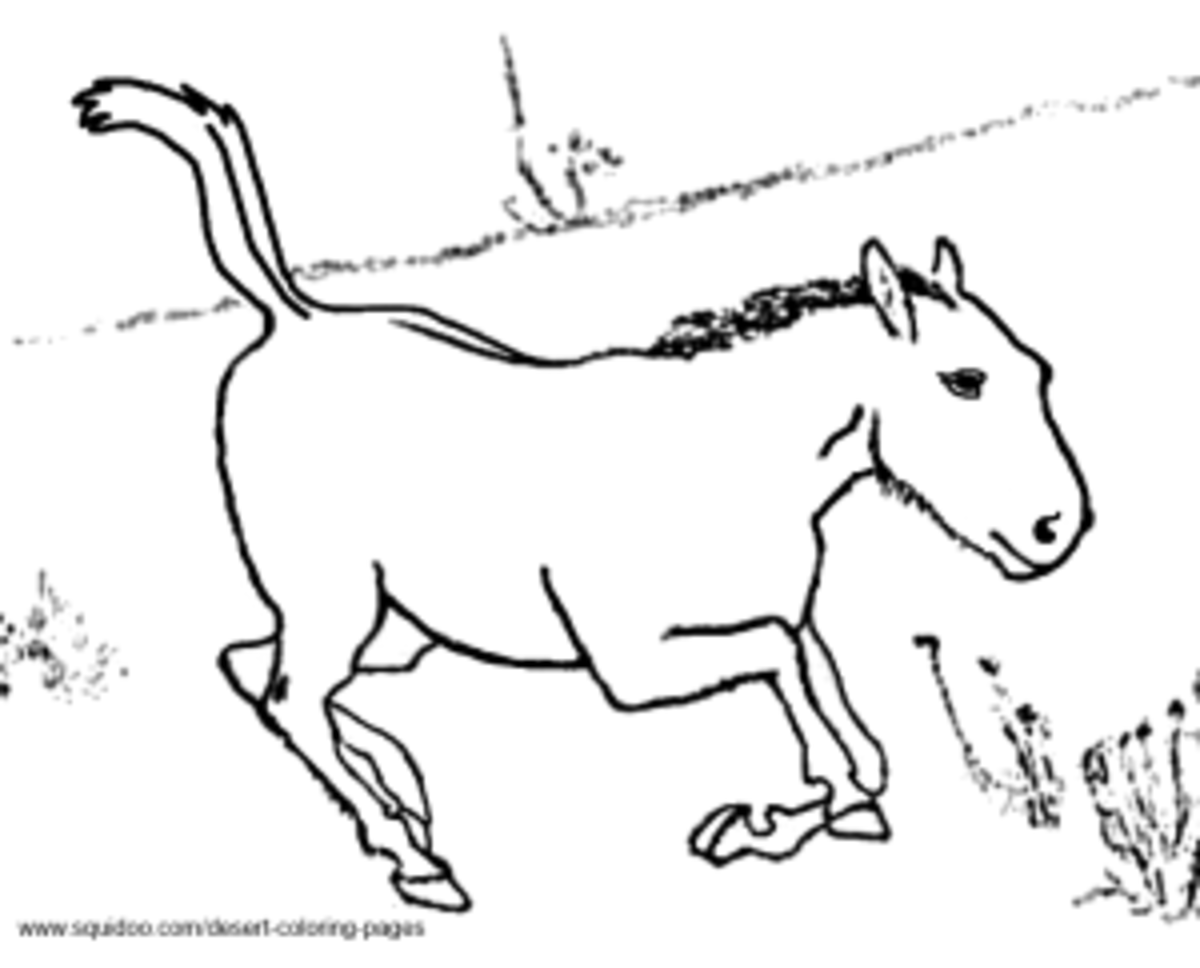 Przewalski's Horse Coloring Pages