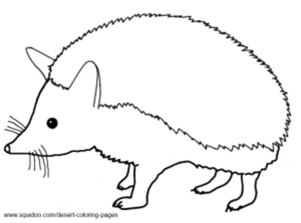 Desert Hedgehog / Long-Eared Hedgehog Coloring Pages