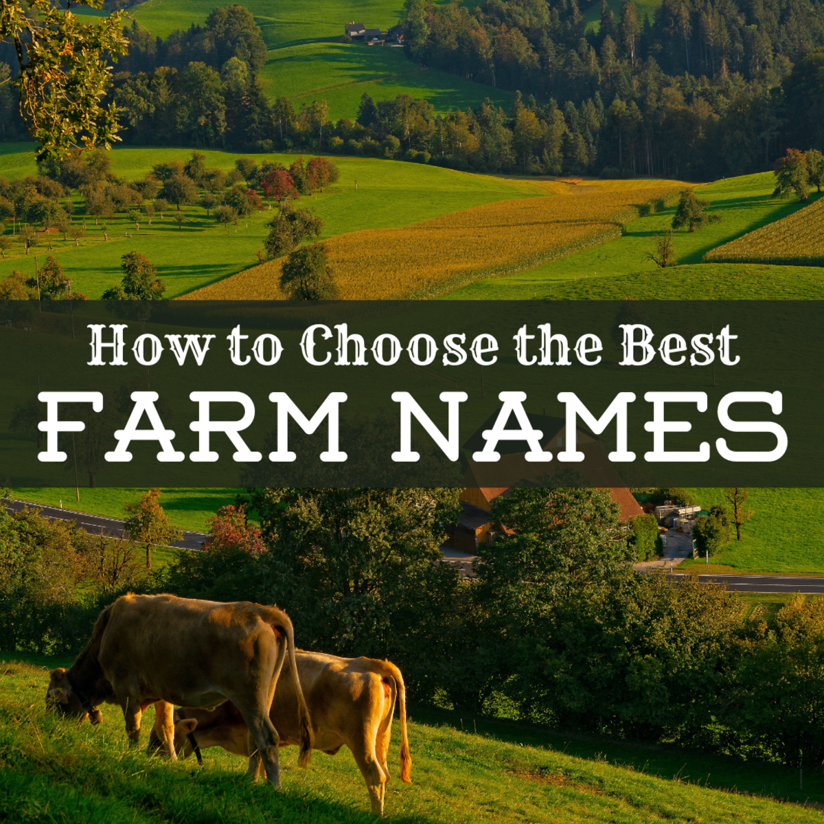 Need a fitting name for your farm, ranch, orchard, homestead, or vineyard? Get tons of name ideas here, and learn how to generate your own.