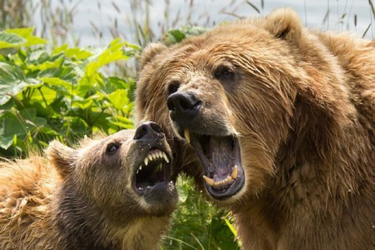 I'm not sure I would have what it takes to take these bears by the teeth.