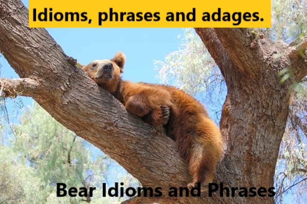 Idioms about Bears. Bears are such strong and formidable characters - even when just chilling.