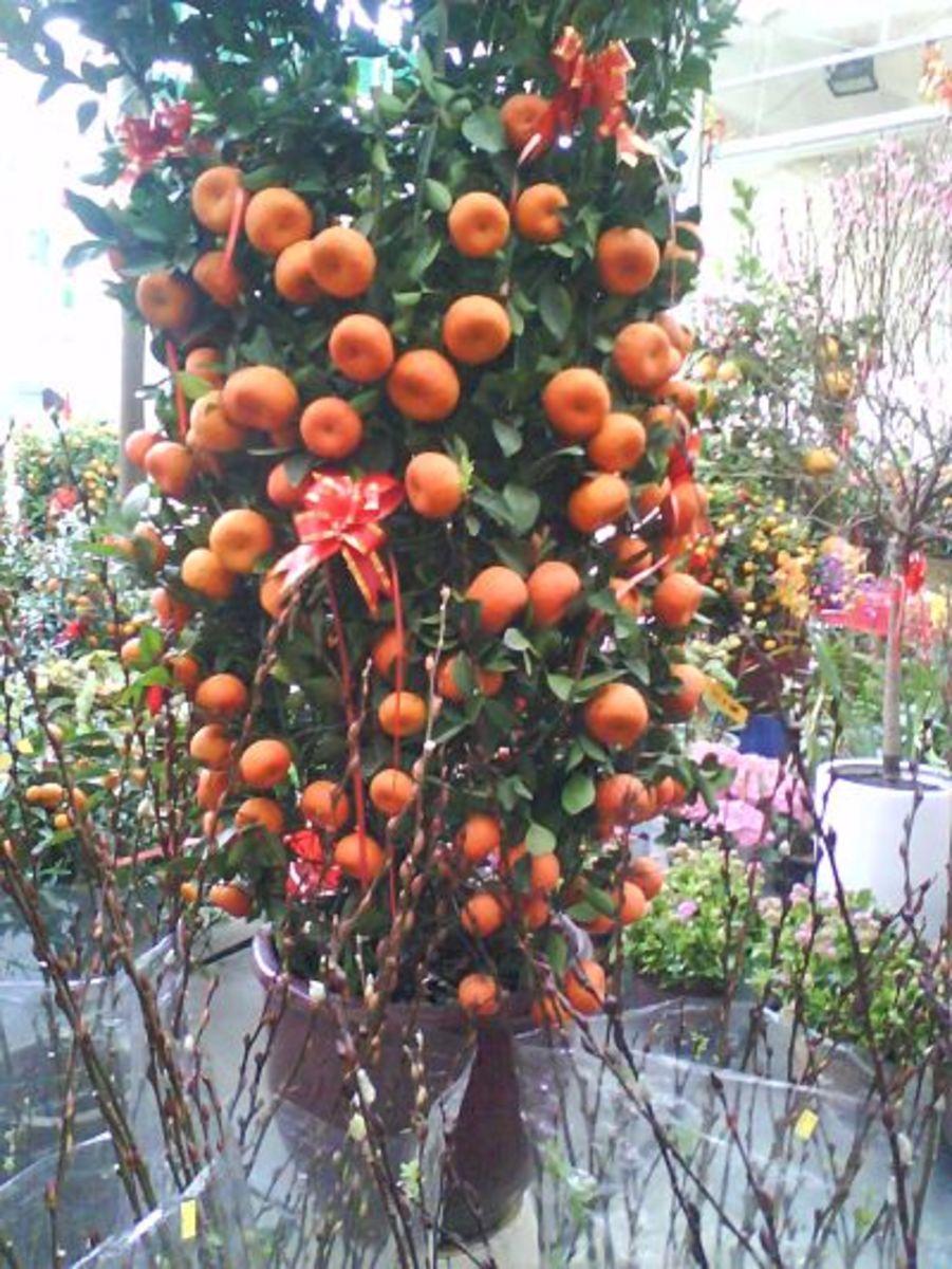 Mandarin Oranges Kumquat