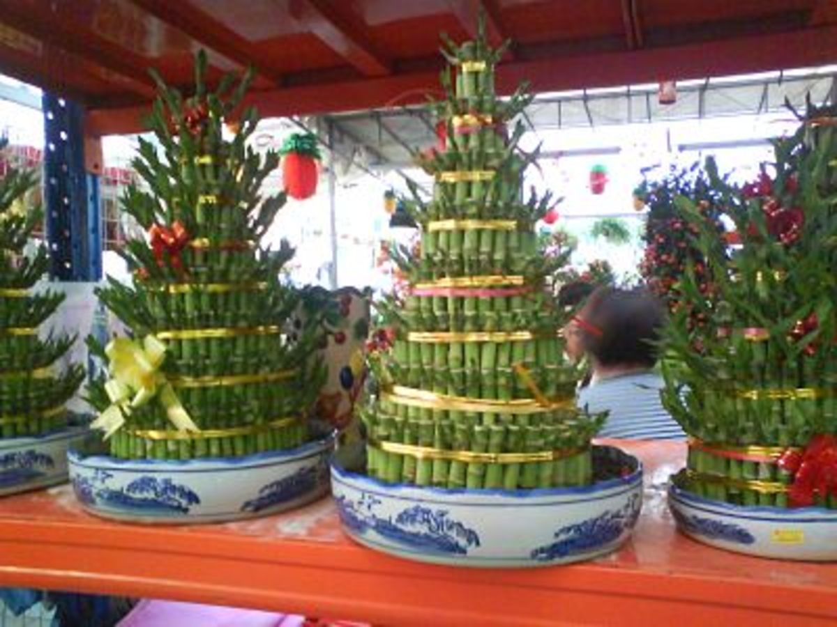 Fortune Bamboo (also called Lucky Bamboo) -arranged into layers