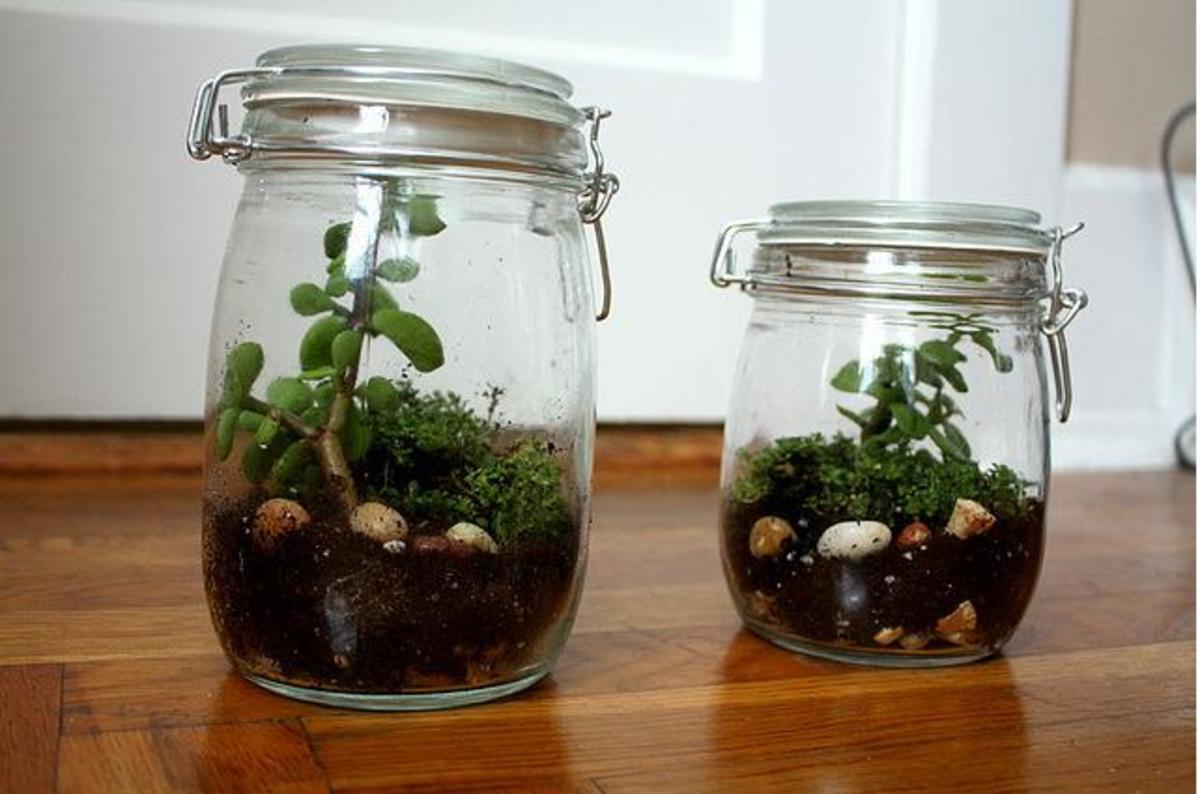 homemade-terrarium