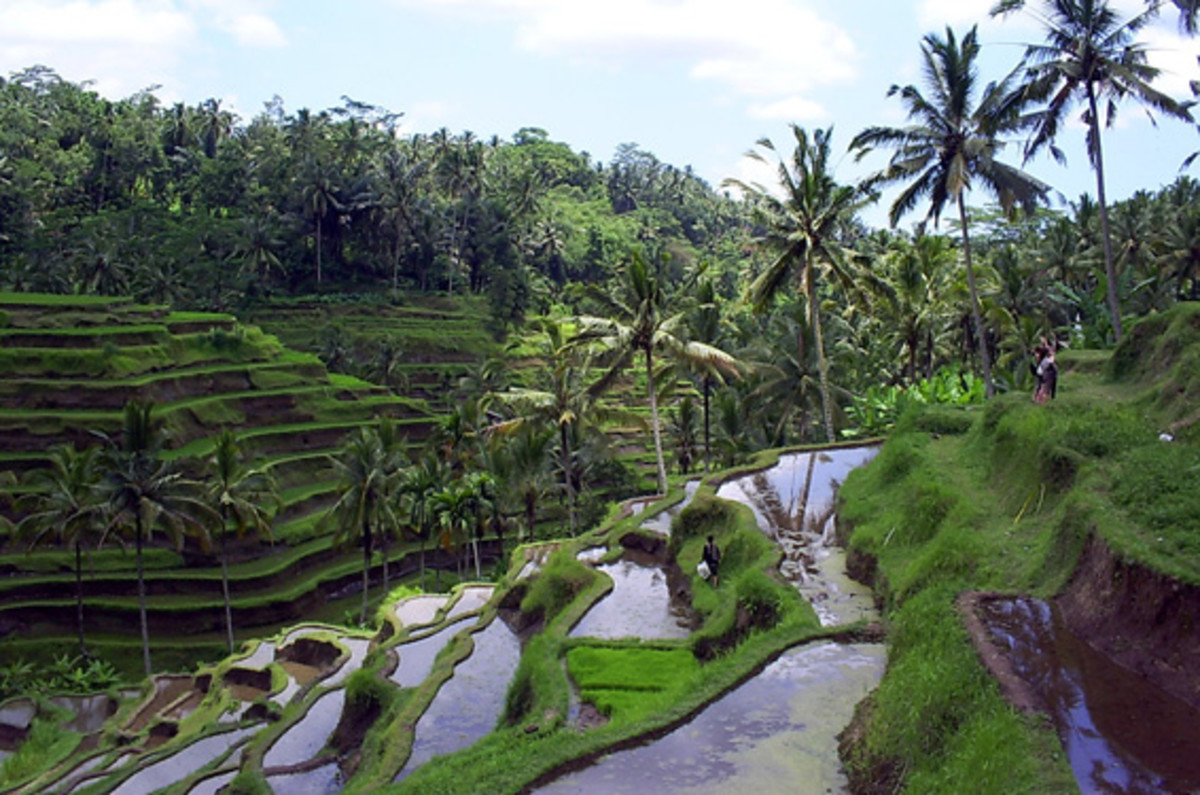 Bali Island - Best Tourist Destination in South East Asia