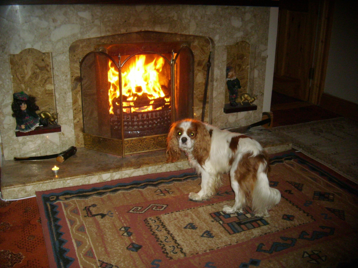 Open fire in the living room with Angus.