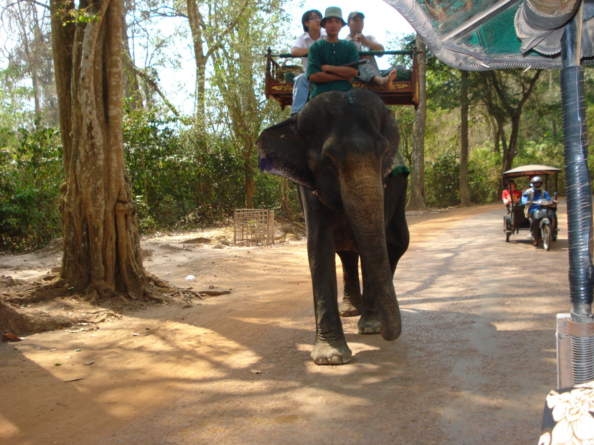 Elephant Rides in Cambodia Srok Khmer!