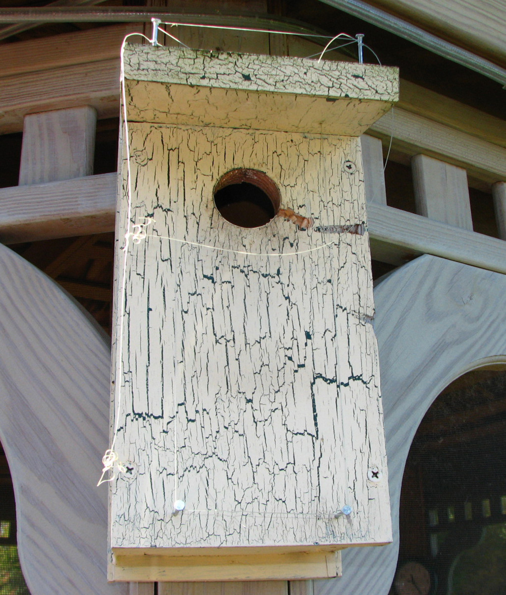 Front view of the Bird House