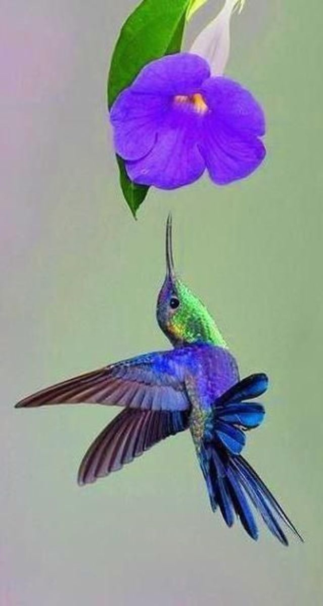 Fascinating Hummingbirds!