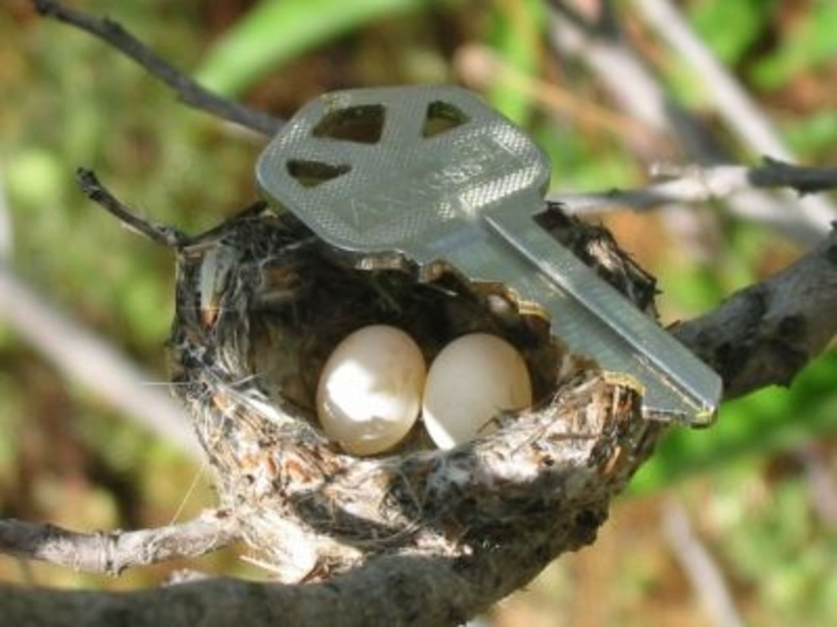 This should give you an Idea of the size of their nest