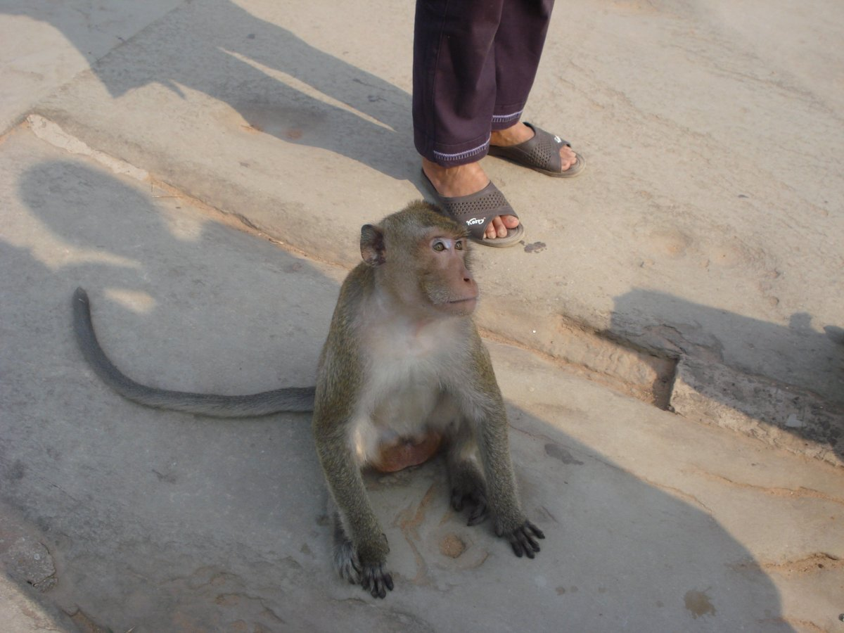 You'll see plenty of monkeys around the market in Cambodia. Be careful, they try to steal your food and are known to be violent!