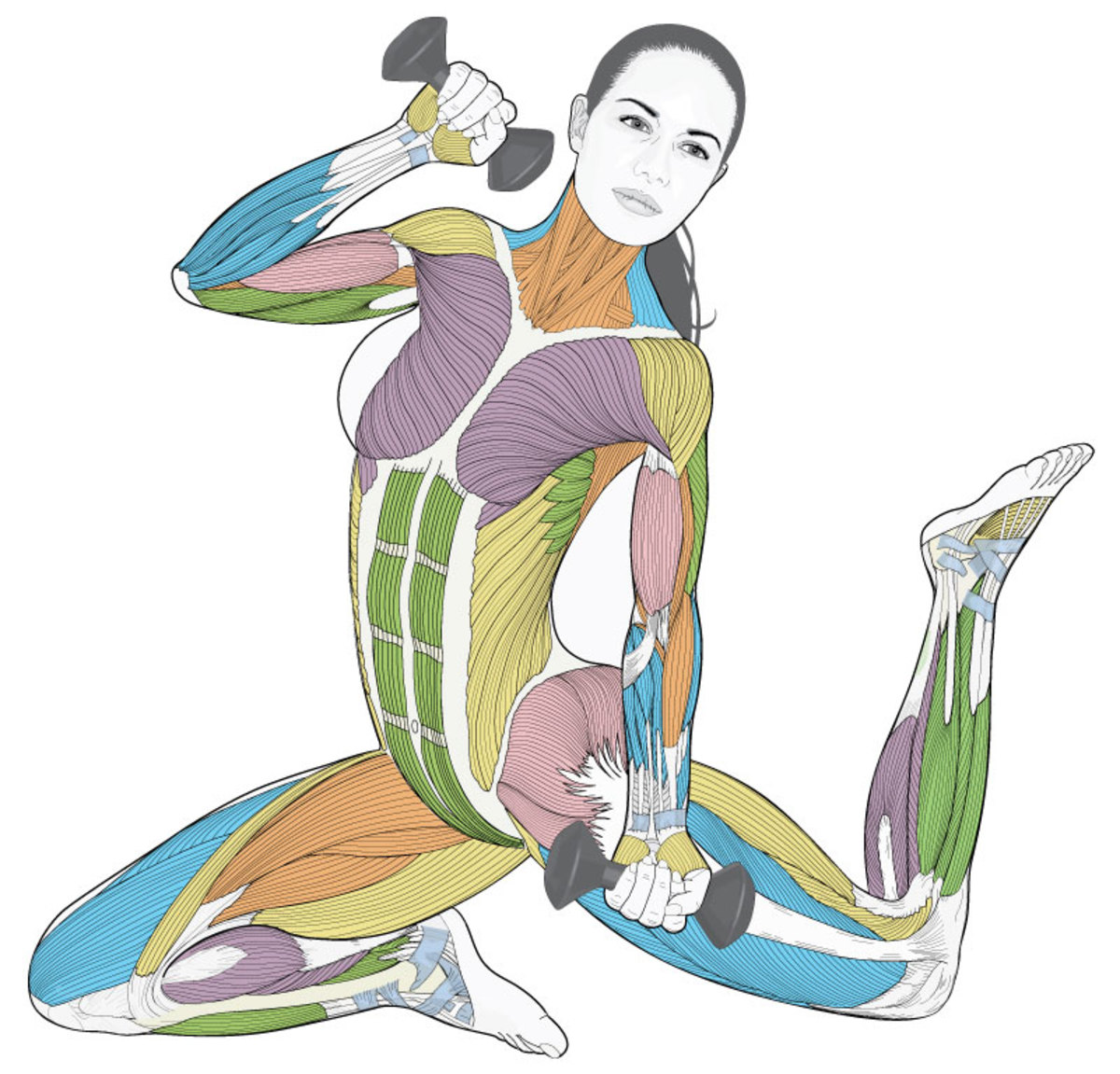 Beautiful artistic drawing of female anatomy with muscles color coded in green blue purple