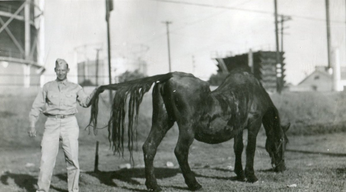 An unmarked picture showing a man in uniform holding the tail of a grazing horse. I would estimate this picture to date from the 1930s. Can anyone identify the uniform?