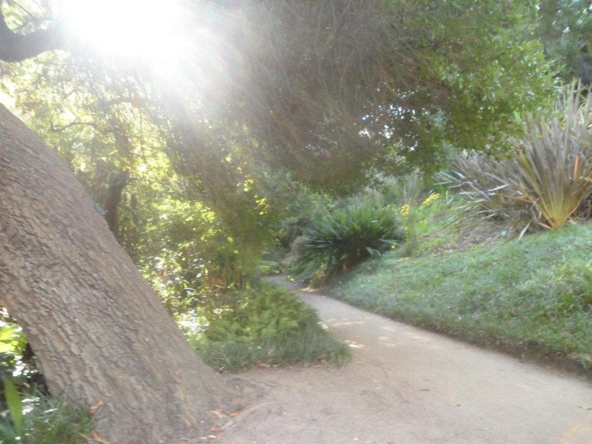 """As we light a path for others, we naturally light our own way.""~Mary Anne Radmacher"