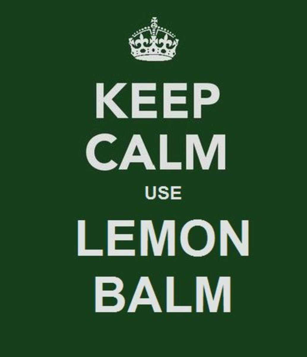 Natural Cures and Dr. Oz...The Lemon Balm Fiasco
