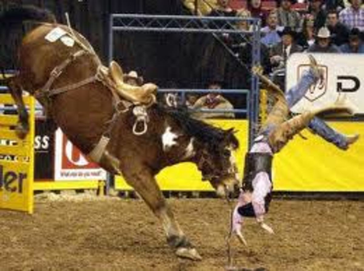 Rodeo Ray needs hazardous pay.